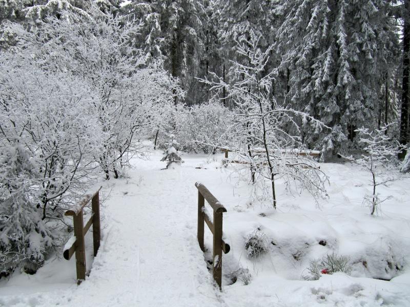 A Walk in the Hautes Fagnes (Belgium)