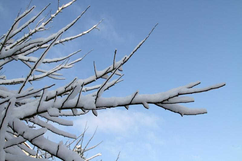 Under the snow…